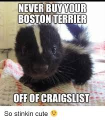 Boston Terrier Memes Google Search Funny Cat Photos Funny