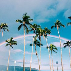 Palms, beach, & rainbows