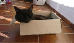 Mogli sleeing in his new Box. So #cute! <3