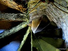Spiral medieval staircase, Reginald's Tower,... - Ancient Ireland