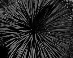 <em>Untitled (Plant)</em>, 2013 Dandelion, Abstract, Artwork, Artist, Flowers, Plants, Work Of Art, Dandelions, Artists