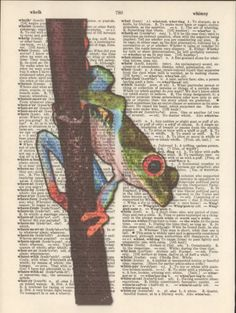 Red-Toe-Tree-Frog-Altered-Art-Print-Upcycled-Vintage-Dictionary-Page-Mixed-Media