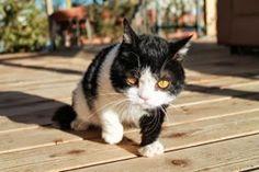 Grumpy Cat's brother #Pokey #photos