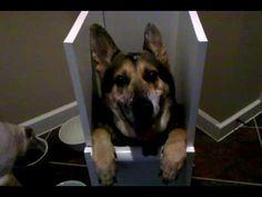 Megaesophagus Dog: Clouse in His New Bailey Box