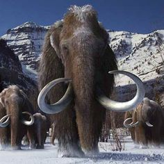 Journey to a world lost in time, buried in ice, and ruled by giants. In this exciting 20-minute, 3D adventure, discover an icy world on the brink of extinction, where humans share the frozen tundra with majestic beasts and encounter some of the Earth's most awe-inspiring mammals—from saber-toothed cats and dire wolves to giant sloths and iconic mammoths that lived 5,000 years before modern civilization. Tickets are available now at tarpits.org/titans.