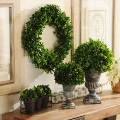 You don't have to have a green thumb to keep your home looking alive and green with these Preserved Boxwood pieces! The preserved green leaves will stay bright with almost no upkeep! #kirklands #SpringisintheAir