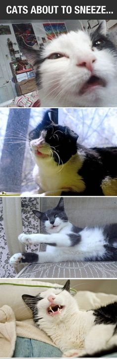 "My cat sounds like a little cartoon sneeze. It's just like ""choo!"" It's the cutest ever"