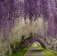 let's escape for a while...    Wisteria Tunnel at Kawachi Fuji Garden, Japan - by Repinly.com