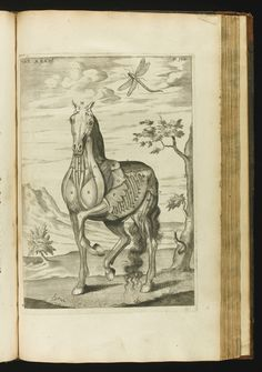 From: 'The Anatomy of a Horse' by Andrew Snape, 1683.. Snape, Andrew | lot | Sotheby's