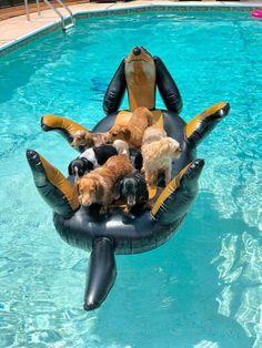 A Dachshund floating Dachshunds