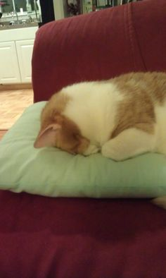 My cat likes to sleep with her face jammed into the pillow