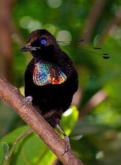 Bird of Paradise         |  #perspicacityparty