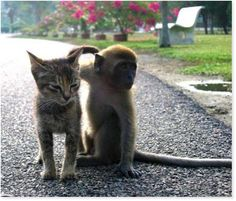 Romancing The Chocolate: Funny Odd Couples: Cats and Their Weirdo Friends Unusual Animal Friendships, Unlikely Animal Friends, Unusual Animals, Cute Baby Cats, Cute Baby Animals, Funny Animals, Funniest Animals, Funny Cat Videos, Funny Cats