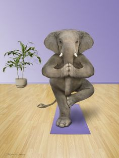Elephant Doing Yoga - Funny Elephant Pictures and Photos Funny Elephant, Elephant Love, Elephant Art, African Elephant, Yoga For All, Yoga For Kids, How To Do Yoga, Elephants Photos, Elephant Pictures