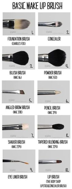 Basic Makeup Brushes