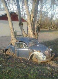 Volkswagen Coccinelle (la pauvre)