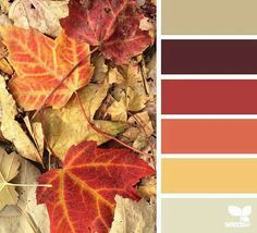 Fall color palet
