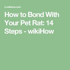 How to Bond With Your Pet Rat: 14 Steps - wikiHow
