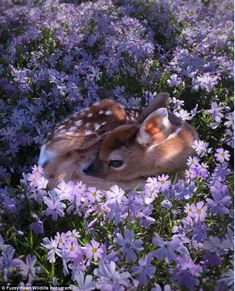 Bambi baby deer in the flowerbed Cute Creatures, Beautiful Creatures, Animals Beautiful, Pretty Animals, Beautiful Flowers, Beautiful Pictures, Beautiful Things, Beautiful People, Nature Animals
