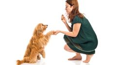 Want to know how to keep your dog from running away? The best way is to provide your pet with the best home he can possibly have. Shelter Dogs, Rescue Dogs, Homeless Dogs, Pet Gate, Dog Chews, Dog Park, Training Your Dog, Pet Store, Dog Leash
