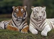 animals - Google Search
