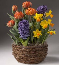 Surprise Mom with cheerful color she'll enjoy for weeks! Fused with an array of color, this bulb garden of 5 Orange Princess tulips, 5 Jetfire narcissus, and 2 Delft Blue hyacinths is sure to make a mother's holiday.Our Bulb Garden is shipped in the early stages of growth, with blooms usually appearing in about three weeks. Window Box Flowers, Bulb Flowers, Clay Flowers, Flower Pots, Fleurs Diy, Garden Bulbs, Spring Bulbs, Diy Décoration, Faux Plants