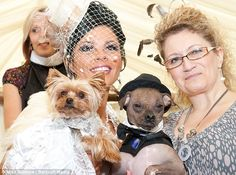 Most lux dog wedding ever!