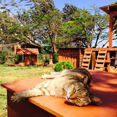 Most people come to the Hawaiian Island of Lana'i for the snorkeling, palm trees, tropical drinks, and hikes on the ridge. But some people—my family included—came recently for a completely different reason: cats. Our destination was the Lana'i Cat Sanctuary, an open-air shelter at which nearly 5...