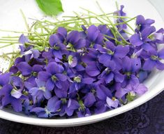 violet flowers - Google Search