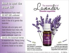 Young Living essential oil Lavender.  Visit my website for more information or to order: www.ylwebsite.com/paola