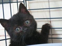 IMA Petit chaton retiré d'un site de chat errant. A.S.C.A Action Solidarité Cause Animale(Vosges)