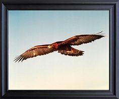 American Golden Eagle Animal Wall Decor Picture Black Fra... https://www.amazon.com/dp/B00ZQXUDM6/ref=cm_sw_r_pi_dp_x_jL9oybYE3TJ69