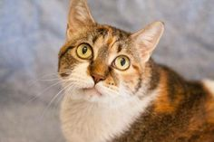 Friends For the Dearborn Animal Shelter Addy is a sweet girl, 12 yrs young, affectionate and hoping for a home