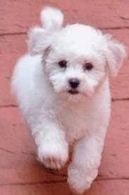 CachorrosBlogs.: Cachorros - Recuperação Fisica.