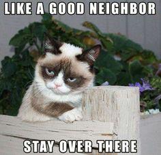 Like a good neighbor...Grumpy Cat!
