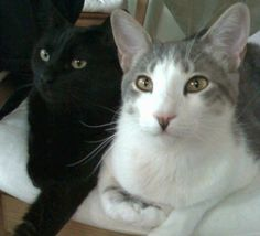 """Nola & Cubbie"" from San Diego, CA.  They have the same paw folded under them! How Cute!"