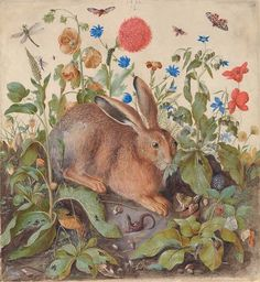 Hans Hoffman - A hare among plants - 1582 - via Christie's Albrecht Dürer - Hare - 1502 Hans Hoffmann - Hare - 1582 Hans Hoffmann - Hare -…
