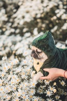 Cute Cats And Dogs, Cute Pugs, Cute Dogs And Puppies, Pugs In Costume, Pug Puppies, Pug Love, Cute Creatures, Beautiful Dogs, Animal Memes