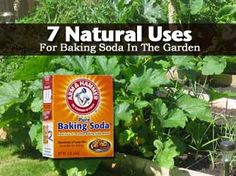 7 Natural Uses For Baking Soda In The Garden - Plant Care Today. Never knew baking soda could not only act as a fungicide but it can also treat and prevent powdery mildew, discourages gnats in soil, fungus on leaves, weeds and kills cabbage worms and crabgrass while keep your hands clean.