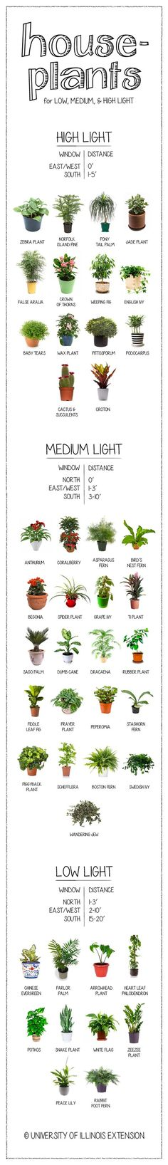 Houseplants for Low, Medium, & Bright Light