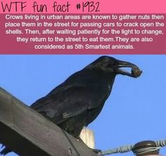 WTF Fun Facts is updated daily with interesting & funny random facts. We post about health, celebs/people, places, animals, history information and much more. New facts all day - every day! Wtf Fun Facts, True Facts, Funny Facts, Random Facts, Crazy Facts, Strange Facts, Random Trivia, The More You Know, Good To Know