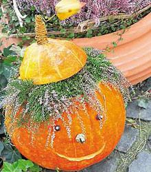 Halloween pumpkin with hair of the calluna flowers Halloween Party Decor, Holidays Halloween, Halloween Crafts, Funny Pumpkins, Halloween Pumpkins, Autumn Decorating, Fall Decor, Creative Pumpkins, Pumpkin Flower