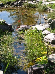 Really love this natural-looking goldfish pond.