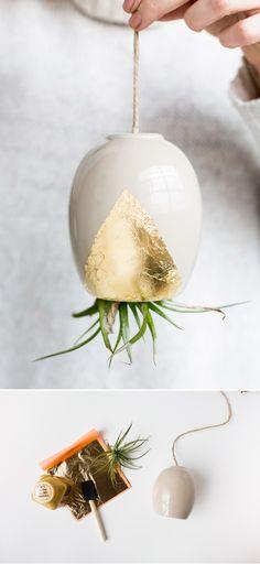 160 besten growing bilder auf pinterest pflanzen dekor zimmerpflanzen und balkon - Zimmerpflanzen groay ...