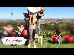 Reto de la cubeta con hielo famosos //Jennifer Lopez JLO //Ice Bucket Ch...