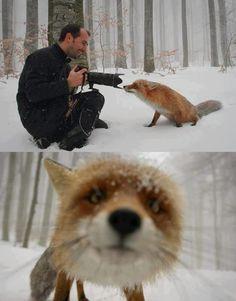 Por un mundo donde los únicos disparos que se escuchen en un bosque sean los de una cámara fotográfica.  https://www.facebook.com/IgualdadAnimal