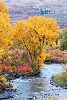 Gunnison-Crested Butte, Colorado  Fall Colors on the East River by Allan Ivy