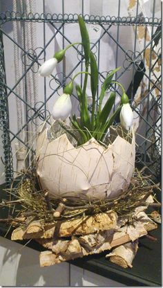 Lovely snowdrops in an egg