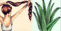 Esta é certamente a mais poderosa receita à base de babosa para deter a queda e estimular o crescimento do cabelo.