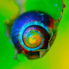 Photographer Pernille Westh   Wonderful colored snail · Get my 7 FREE basic photography tips - you need to know! http://pw5383.wixsite.com/free-photo-tips
